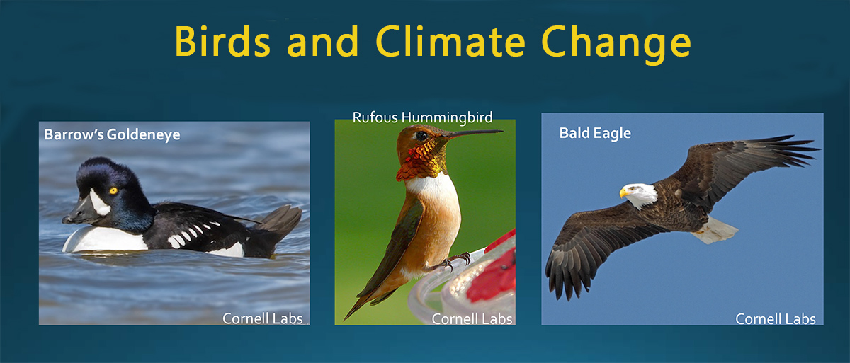 The Effects of Climate Change on Washington's Birds