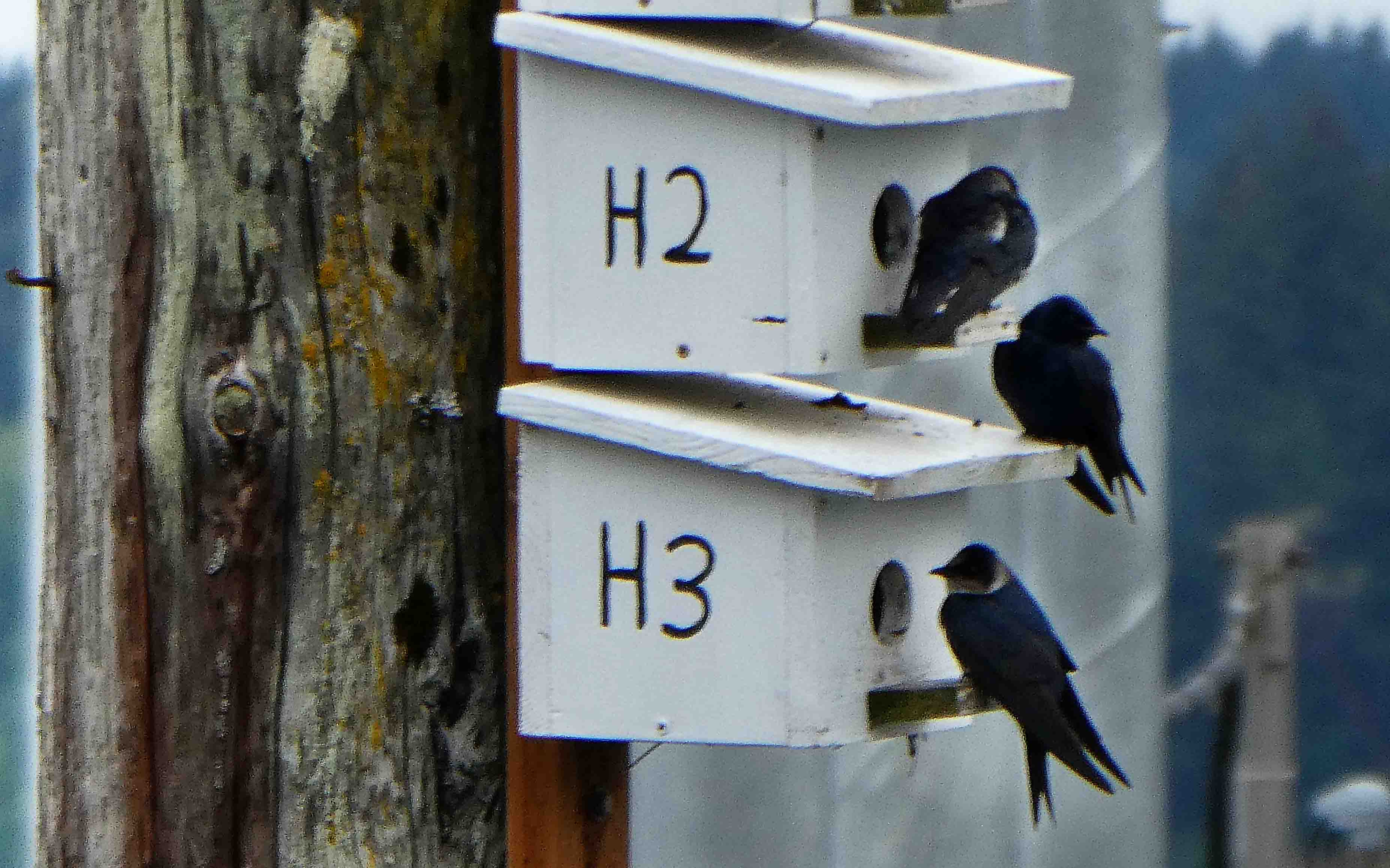 Black Hills Audubon Society News Items